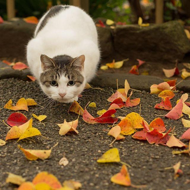 日本猫 性格
