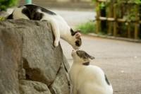 一举一动都融化爱猫人!摄影师镜头下最迷人的日本街猫
