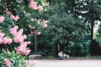 Slow Romance——何日再逢君 Vol.2 京都御苑