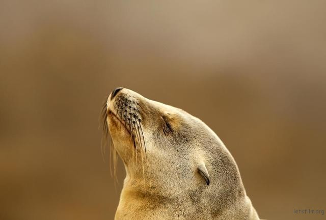 A seal pup rests on rocky point along shoreline in La Jolla, California