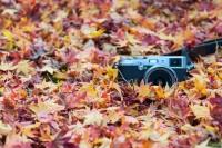 「摄影 365」计划分享