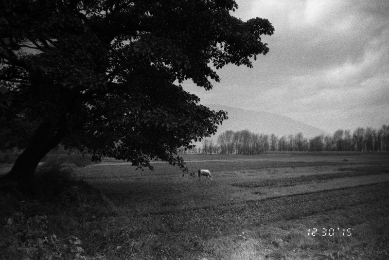 古树下的马儿, 看上去是如此的美好,但内心却是孤单。