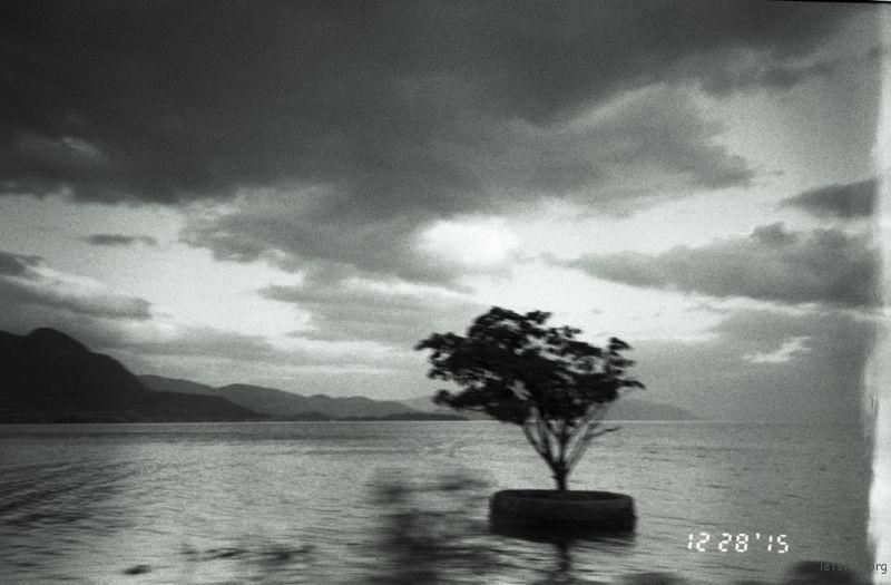 诚实的树, 我觉得这张是对我自己最诚实的一张,因为我还没有来的急撒谎,它就存在了。