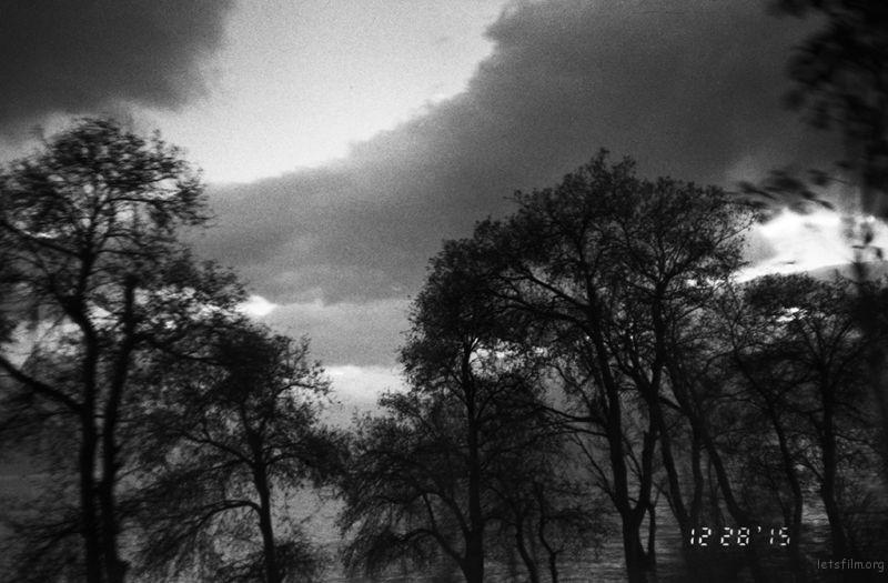 洱海上的树, 很有诗意的洱海树。