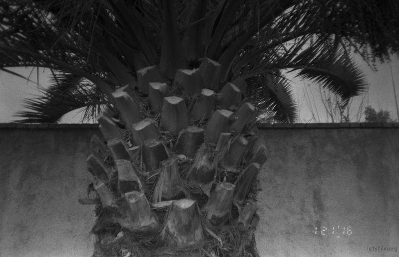 来自南方的树, 似乎要长出画面。