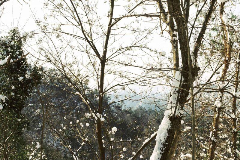 春节前的那场雪