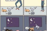 喵星人到底在想什么? 12 个养猫人会懂的猫咪的怪异个性