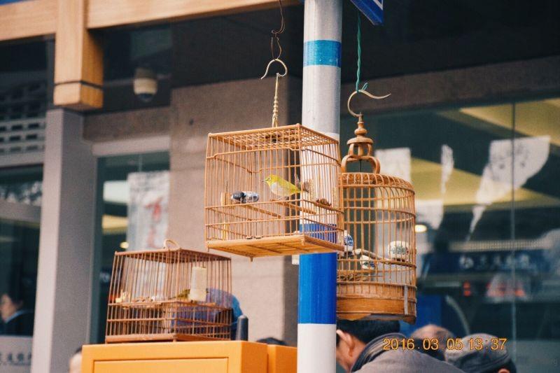一只喜欢鸟的猫