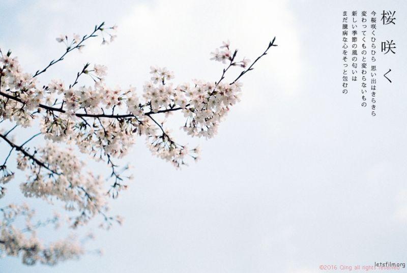 [20160410]桜咲く1-1