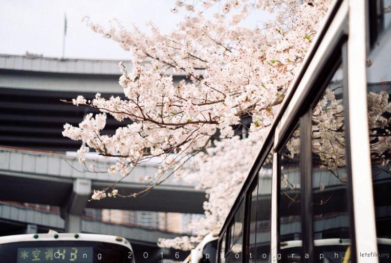 [20160410]桜咲く2-1