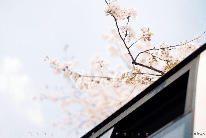 [20160410]桜咲く3-1