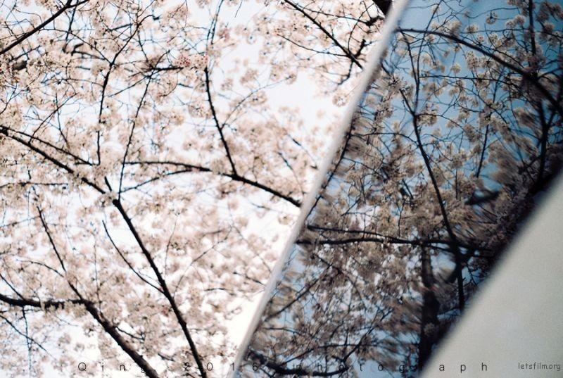 [20160410]桜咲く4-1
