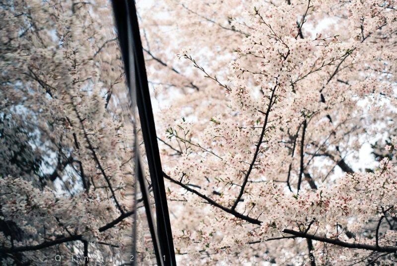 [20160410]桜咲く5-1