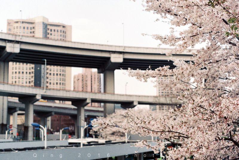 [20160410]桜咲く6-1