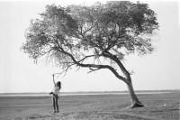 [7482] 一棵树 一段时光
