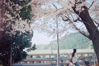 旅行的事:京都三叠