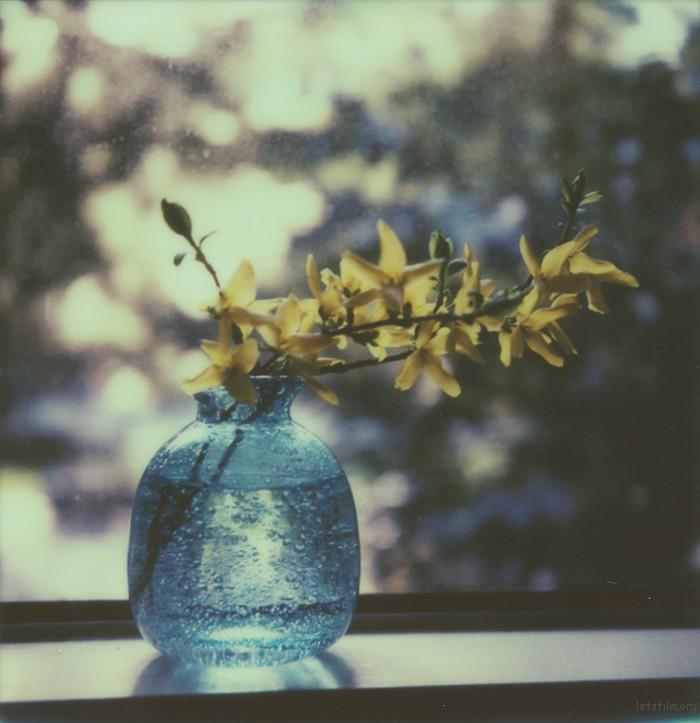 flower_6rs