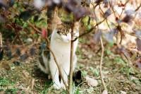 喵~猫~小花