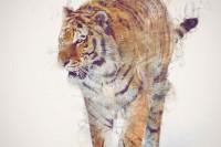 渲染魔幻色彩的动物灵性