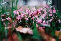 [7625] 春花没有秋月