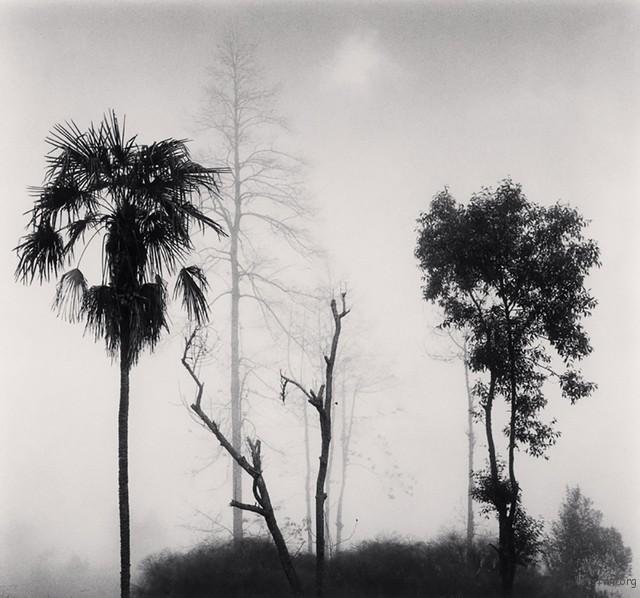 Trees in Fog, Qingkou Village, Yunnan, China, 2013