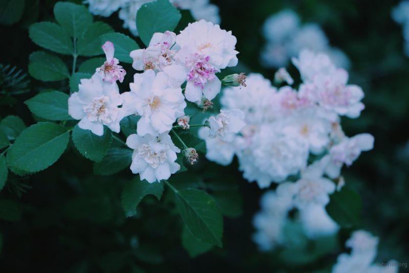 [7691] Drops of summer | 胶片的味道