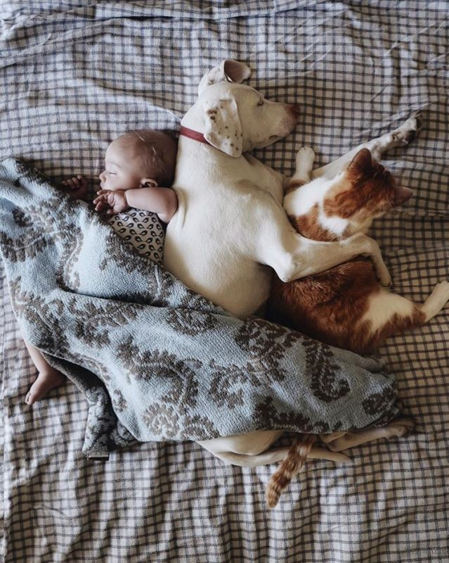 adaymag-3-cats-3gods-3kids-lovely-family-018
