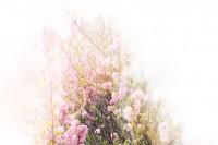 『摄影师』Jesse Pollock:利用双重曝光创造印象主义摄影作品