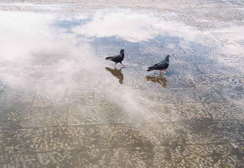 鸽子在天空中