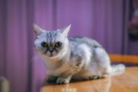 [9506] #猫岛 小灰总是充满好奇