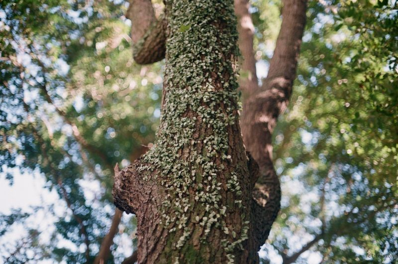 松山文创的绿树
