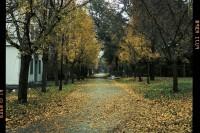 [9536] 校园 · 秋 ·雨后