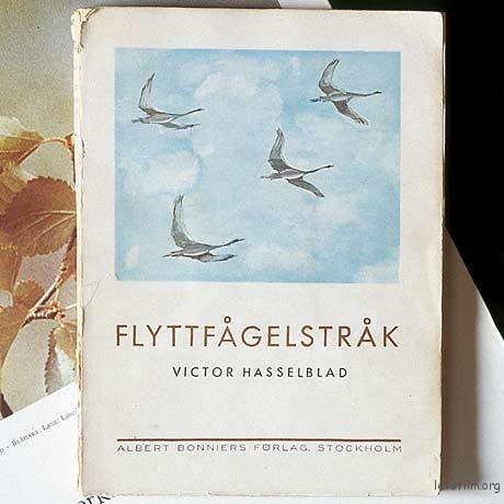 VH bird book