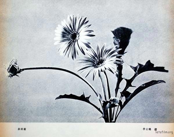 江青摄影作品