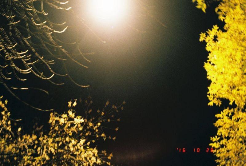 北京的秋天是从绿开始的一瞬间