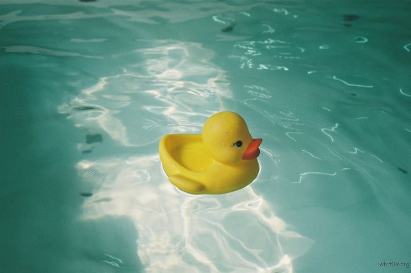duck - dark