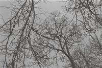 冬季,圣彼得堡的日与夜