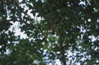 [10260] 楓の季節