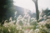 [10560] 攒了一个秋天的阳光,全都送给你。