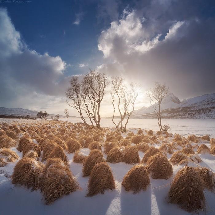 donald-trump-hair-growing-prairie-dropseed-tromso-norway-4