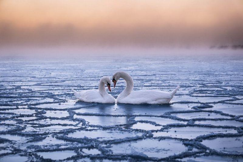 作品︰Braving the cold 摄影师︰Christophe Brutel