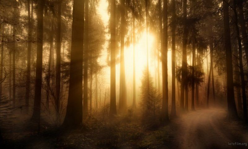 作品︰Misty Forest 摄影师︰Chris Frank