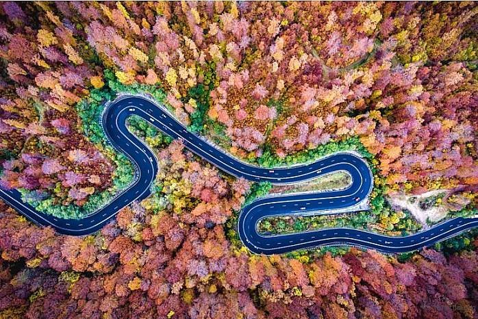 Bogata Forest, Romania by Deepluero