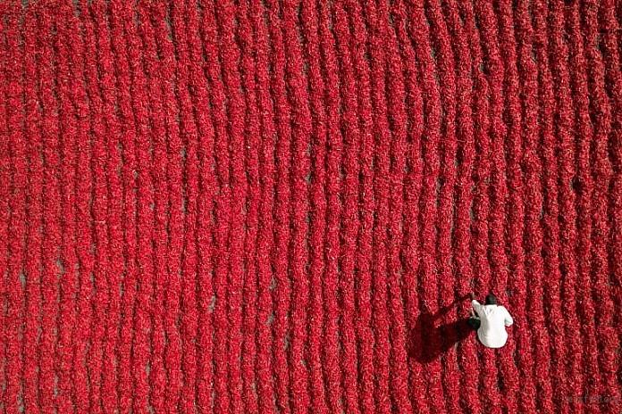 Red Chili Farmer, Guntur, India by Aurobird