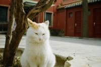 [10927] 初雪后的紫禁城
