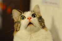 看到别人家养的猫,我觉得自己可能是养到假猫了