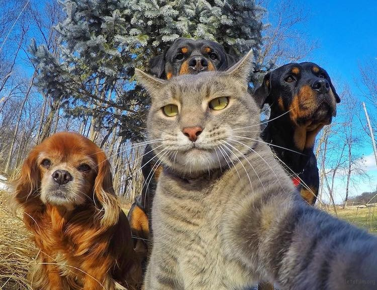 animal-selfies-3