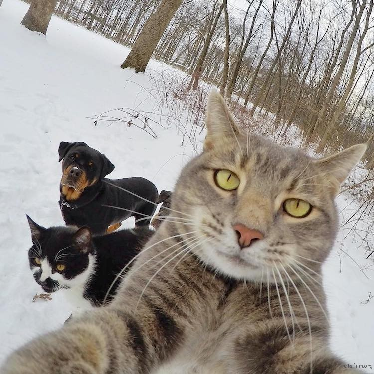 animal-selfies-6
