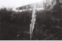 [11103] 黑白时光