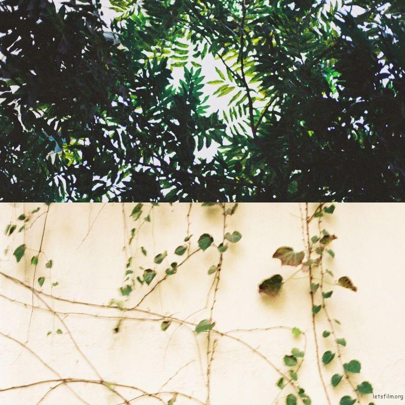 我的照片IMG_3680